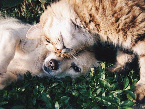 animale hoinare caine pisica